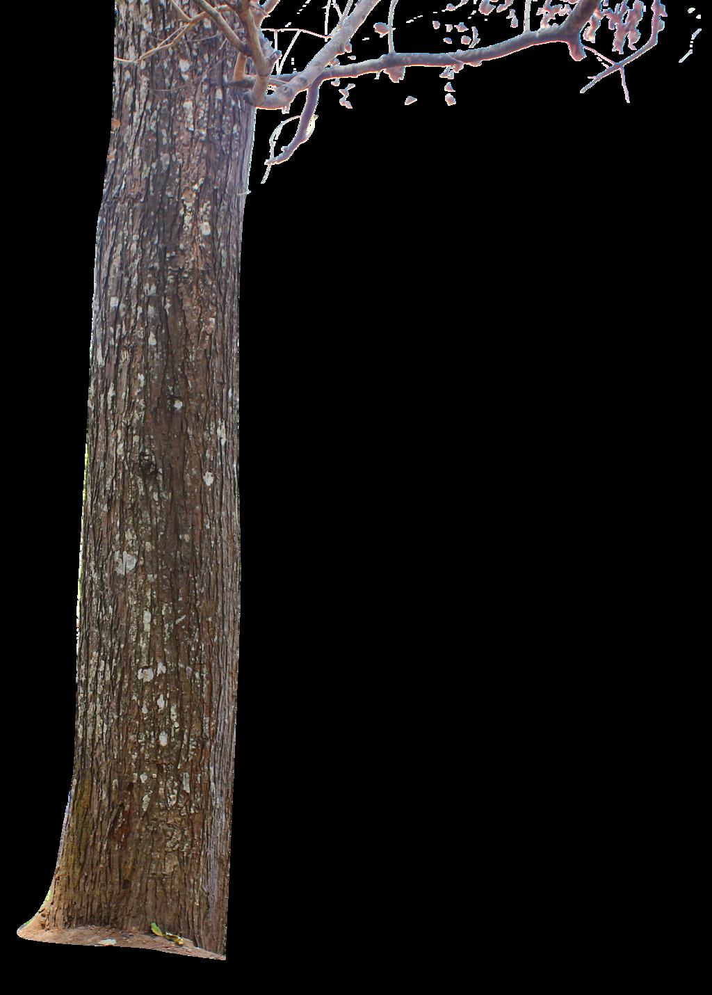 Tree Trunk By Andhikazanuar Tree Trunk By Andhikazanuar - PNG Tree Trunk