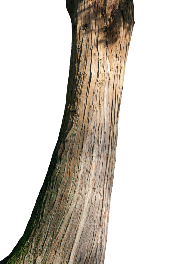 Tree trunk by blumilein PlusPng.com  - PNG Tree Trunk