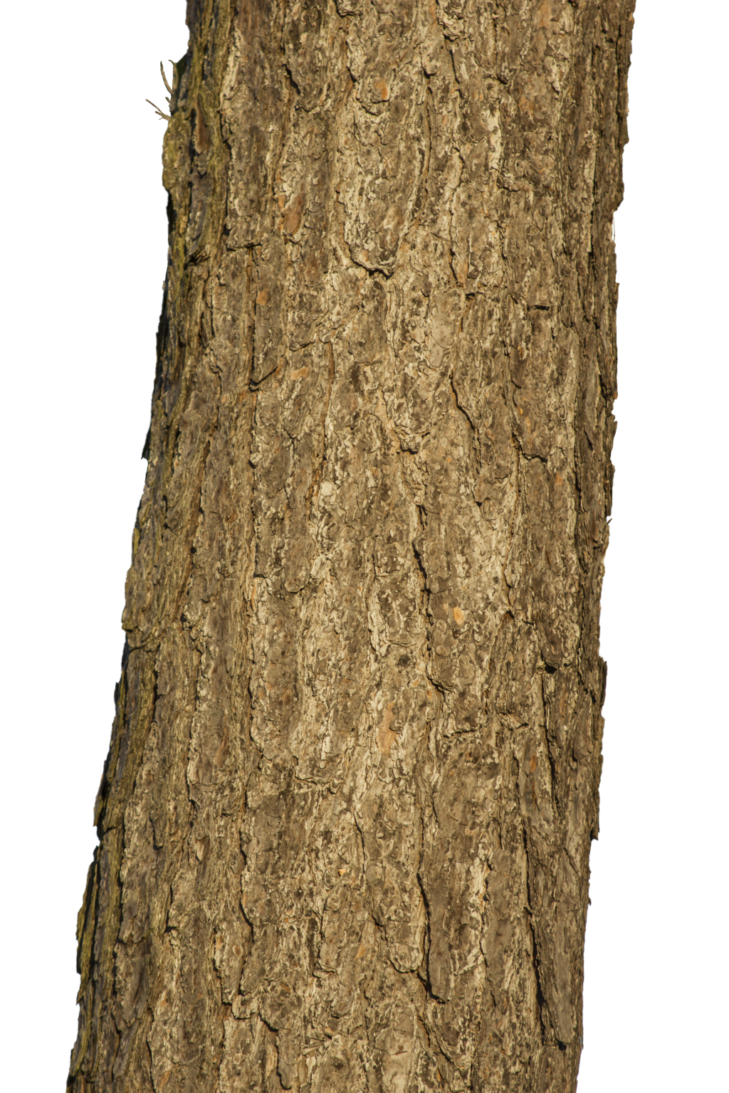 Tree trunk by LuguerDxis Tree trunk by LuguerDxis - PNG Tree Trunk