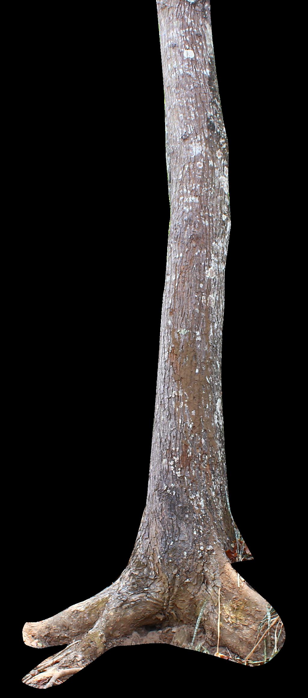 Tree Trunk Png By Andhikazanuar Tree Trunk Png By Andhikazanuar - PNG Tree Trunk