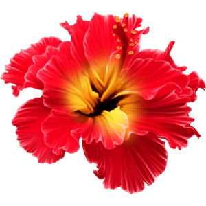 PNG Tropical Flowers-PlusPNG.com-300 - PNG Tropical Flowers