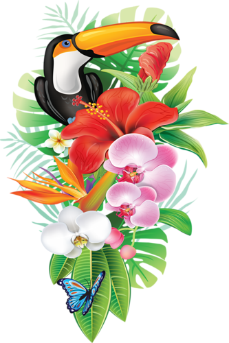 PNG Tropical Flowers - 56865