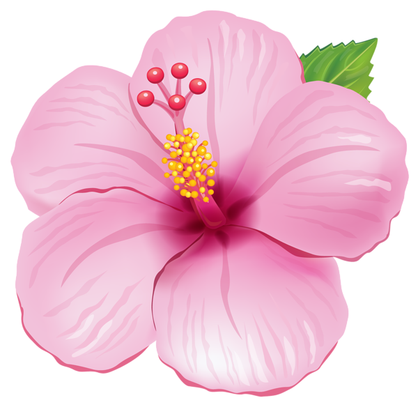 Tropical Flower HQ PNG by Bri
