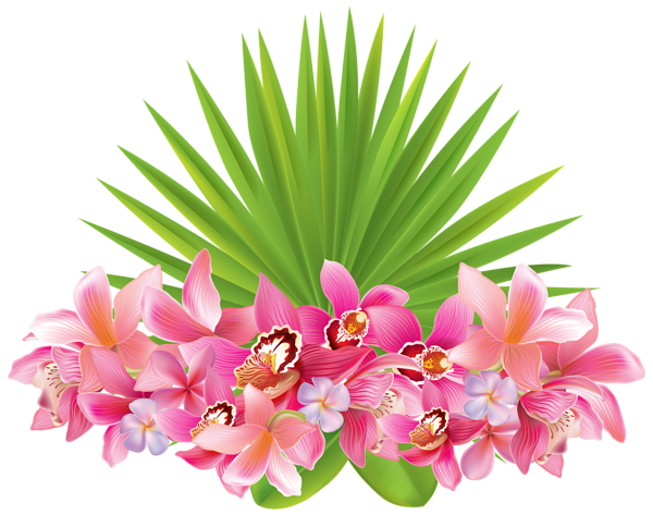 Tropical Flowers PNG Clipart