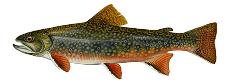 PNG Trout - 83152
