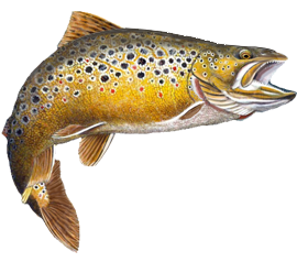PNG Trout - 83151