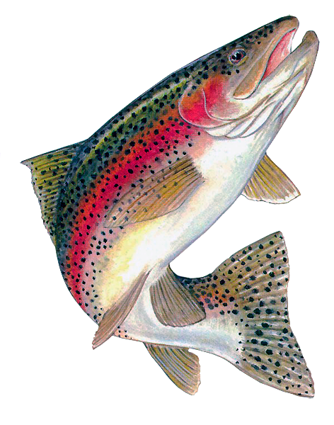 PNG Trout - 83156