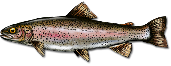 Png trout transparent trout png images pluspng for Wv fish stocking