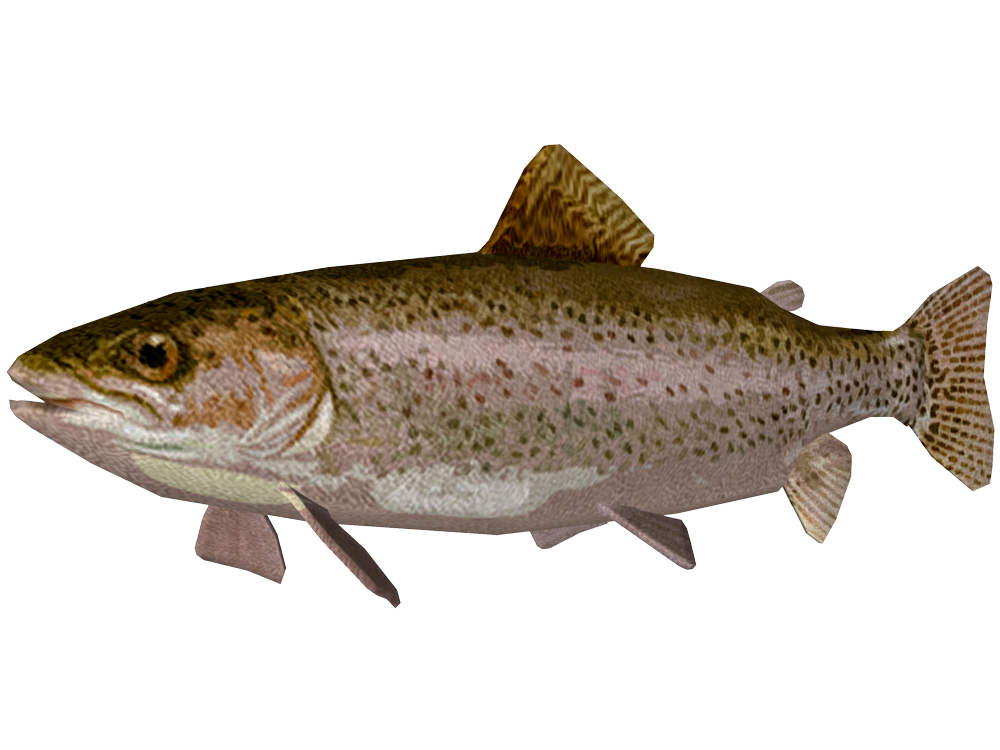 PNG Trout