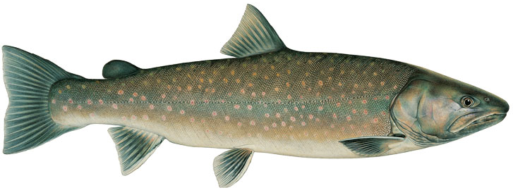 PNG Trout - 83142