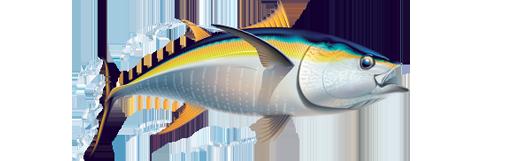 PNG Tuna - 82573
