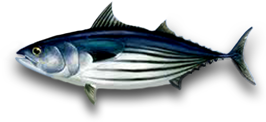 PNG Tuna - 82576