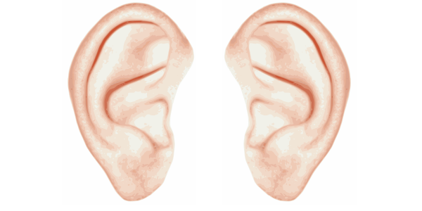 Click image for larger version Name: ears.png Views: 1939 Size: 80.5 - PNG Two Ears