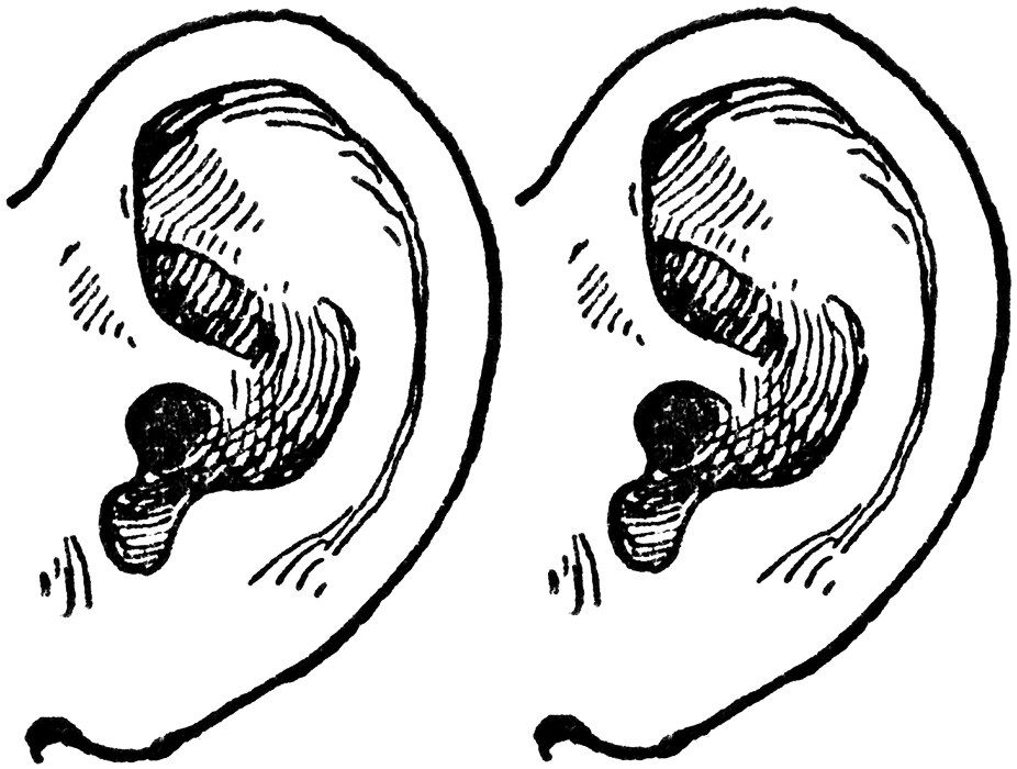two ears - PNG Two Ears