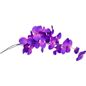 element20.png - PNG Violets Flowers