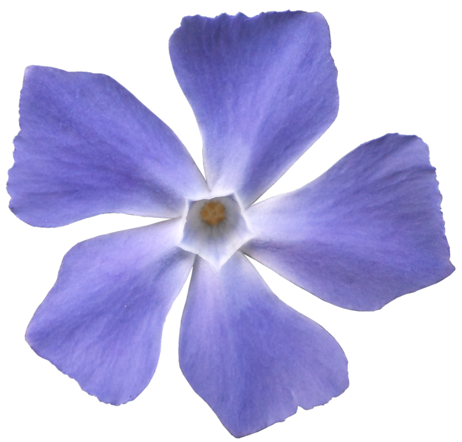 Flower 005 - HB593200 by hb593200 PlusPng.com  - PNG Violets Flowers