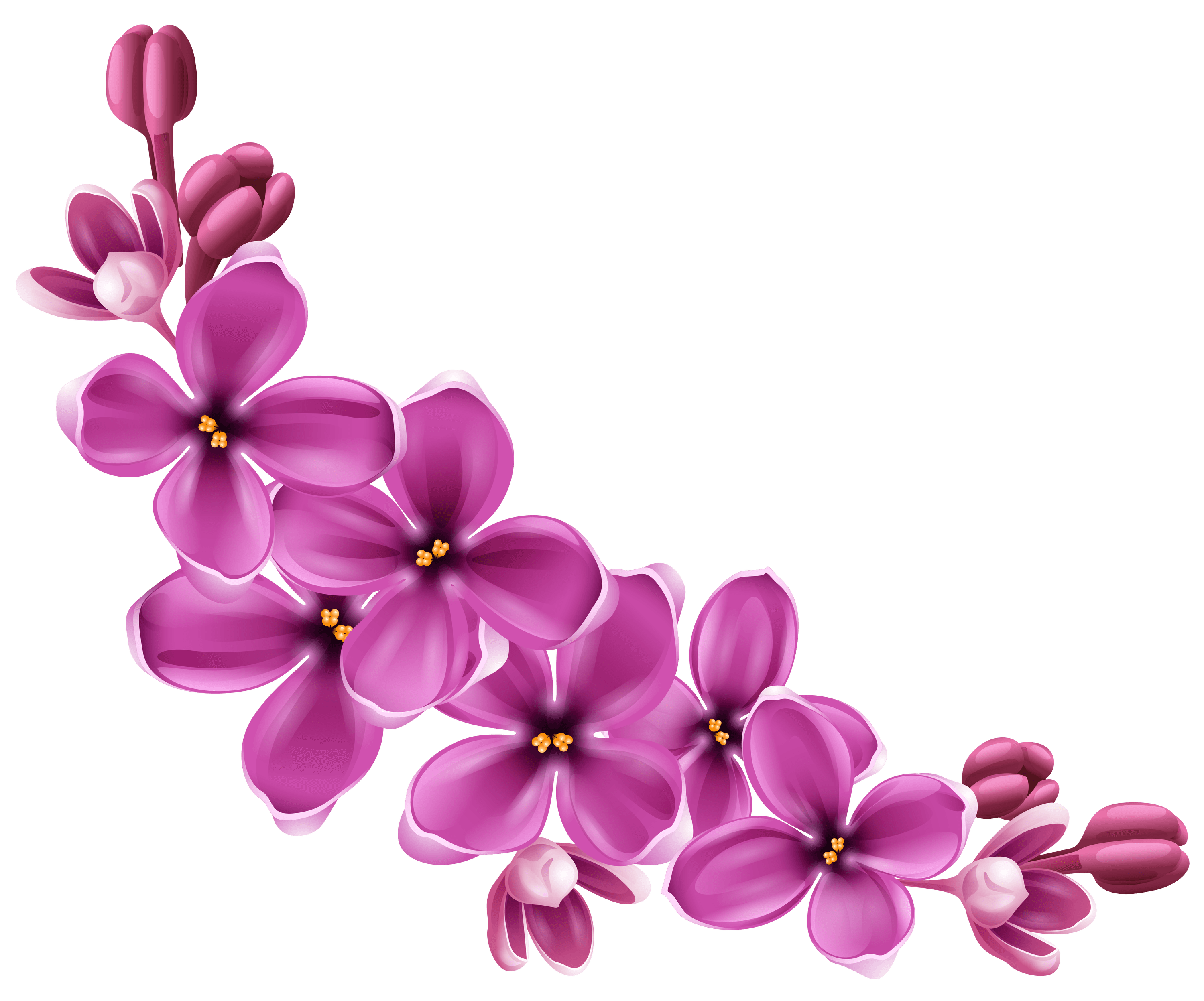Flowers Purple Curve - PNG Violets Flowers