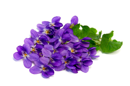 For herbal and Sweet Violet flower - PNG Violets Flowers