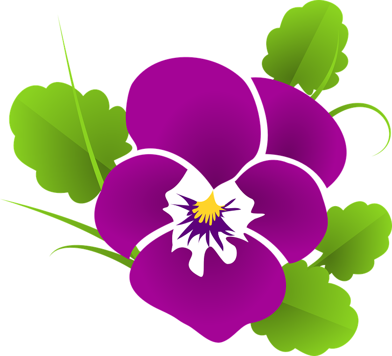 Pansy, Violet, Viola, Violaceae, Blossom - PNG Violets Flowers