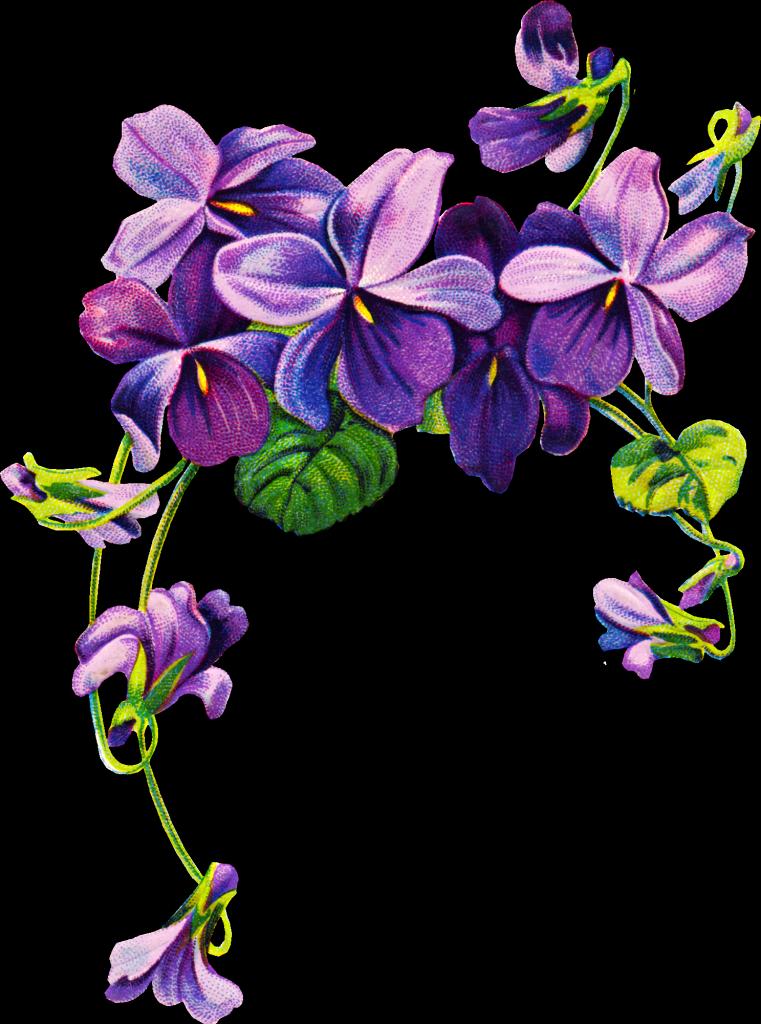 pin Violet clipart violet flower #6 - PNG Violets Flowers