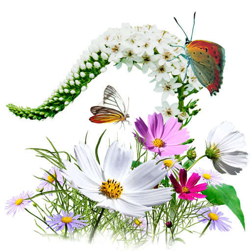 PNG Wildflowers - 53645