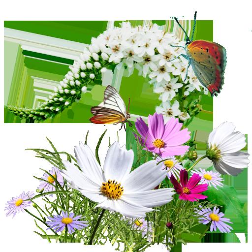 512x512 pixel - PNG Wildflowers