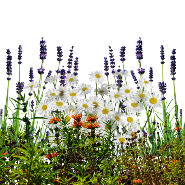 English Wildflowers Cold Crea