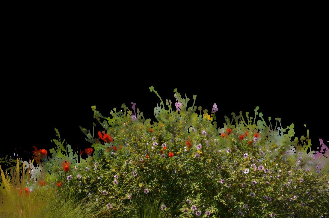 Wild Flowers With Grass 2 Sto