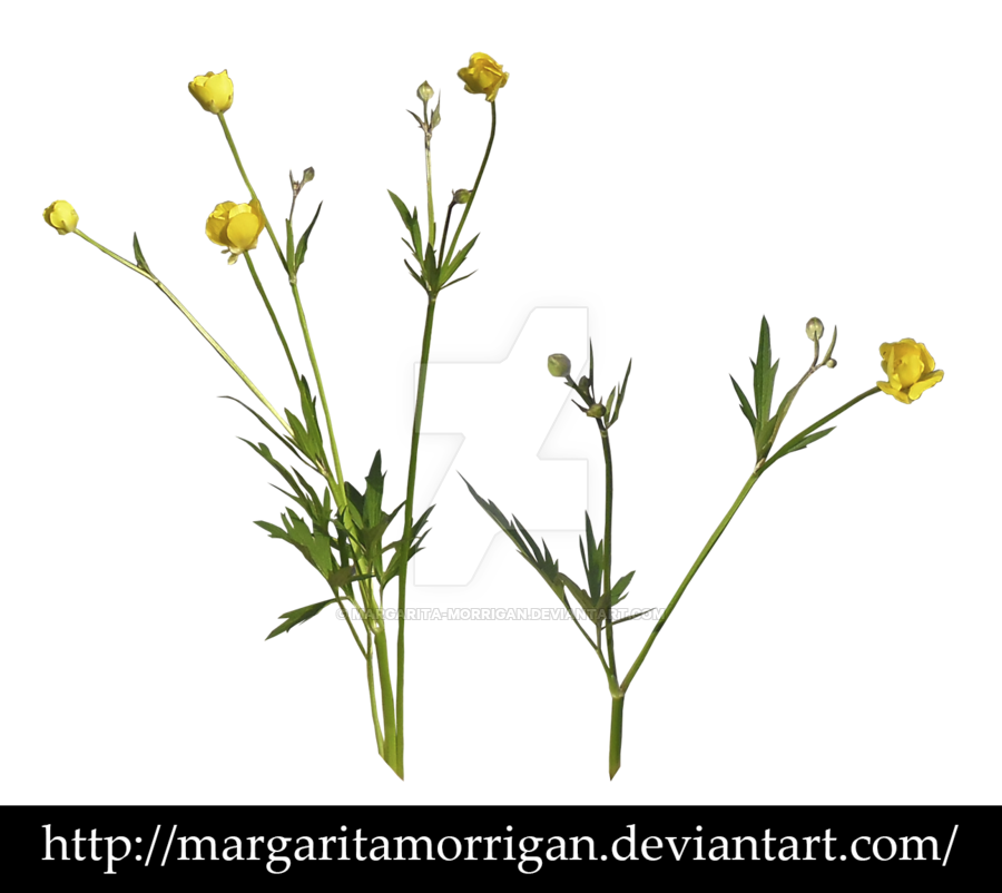 wildflowers by Margaritamorrigan by margarita-morrigan PlusPng.com  - PNG Wildflowers