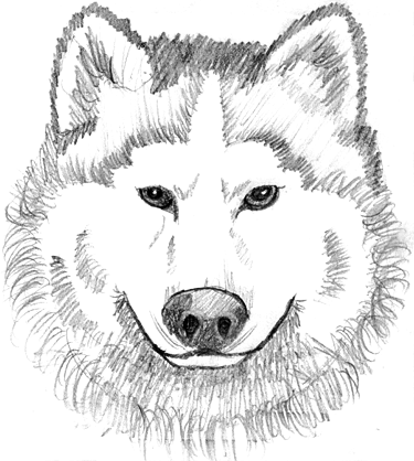 PNG Wolf Head-PlusPNG.com-375 - PNG Wolf Head
