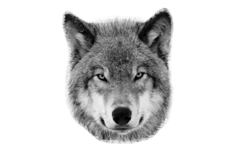 PNG Wolf Head - 42050