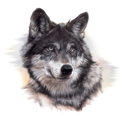 PNG Wolf Head - 42052