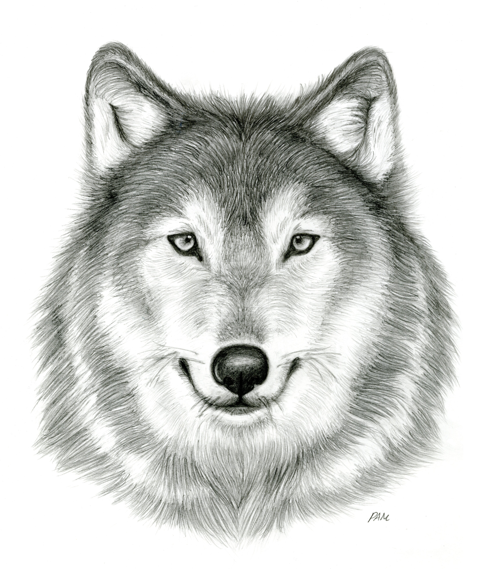 PNG Wolf Head - 42060