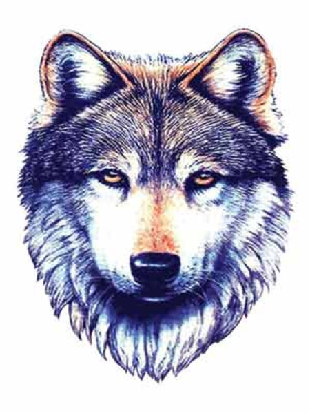 PNG: small · medium · large - PNG Wolf Head