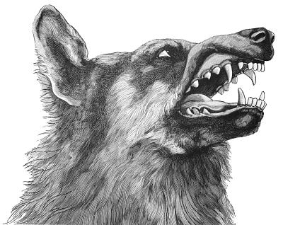 wolf head snarling - /animals/W/wolf/wolf_head/wolf_head_snarling.png.html - PNG Wolf Head