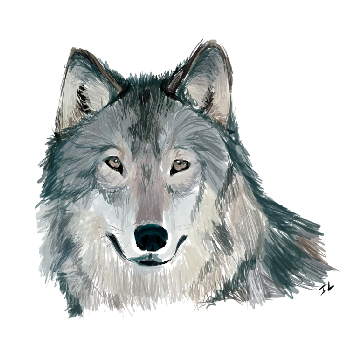 PNG Wolf Head - 42057