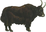 PNG Yak - 41494