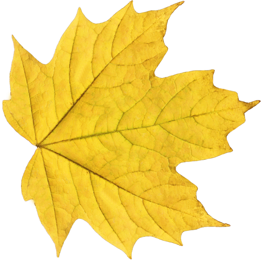 Free Icons Png:Yellow Fall Leaf Png - PNG Yellow