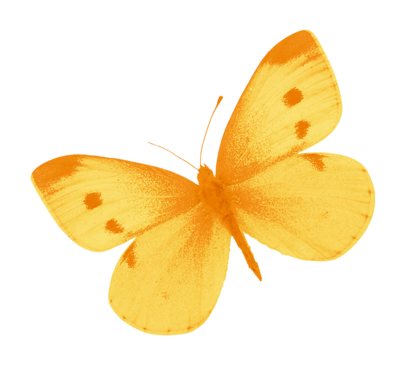 Yellow Butterfly PNG by heemipetal2004 PlusPng.com  - PNG Yellow