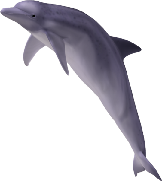 PNG Yunus - 41115