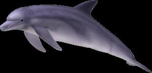 PNG Yunus - 41123