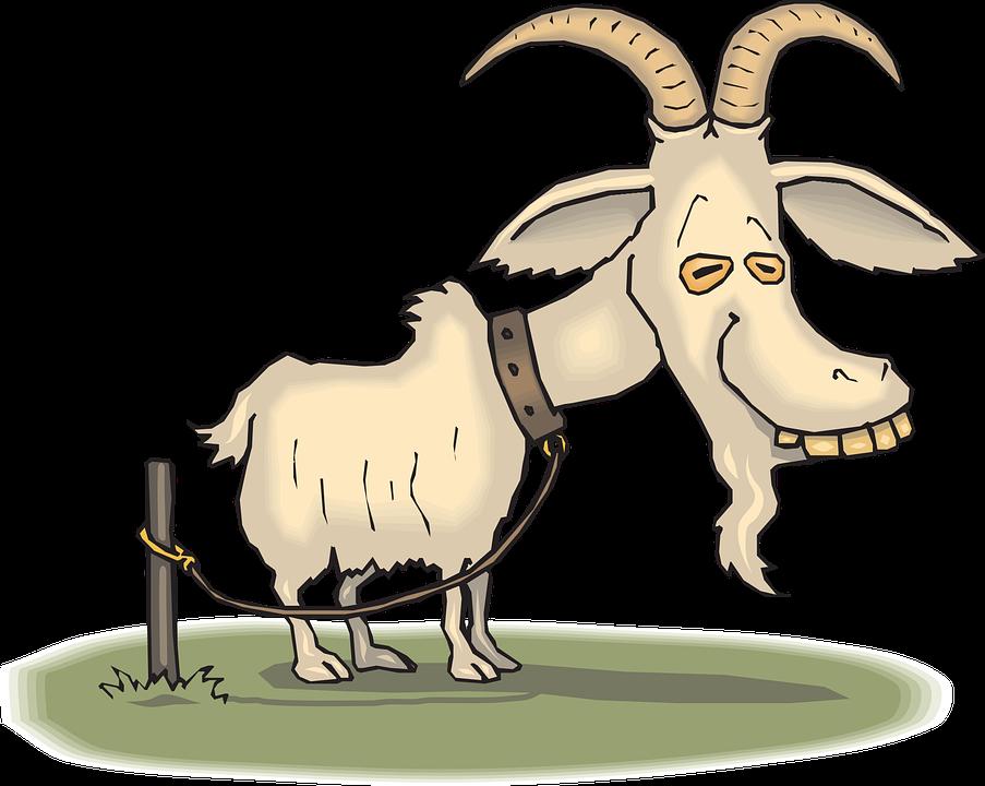 Alte, Ziege, Tier, Müde, Reifen, Gebunden, Seil, Kragen - PNG Ziegenbock