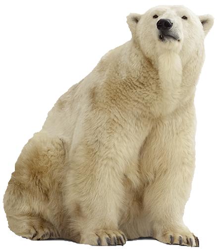 Polar Bear PNG Pic - Polar Bear HD PNG