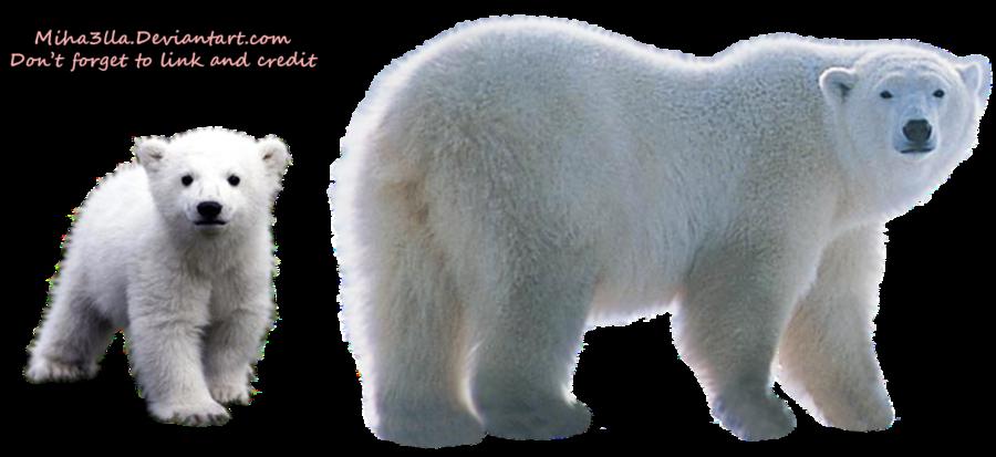 Polar Bear Transparent Background - Polar Bear HD PNG