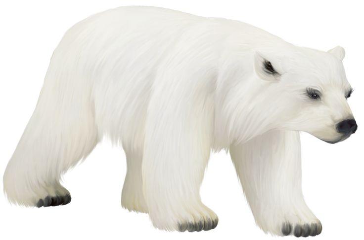 Polar Bear PNG - 25844