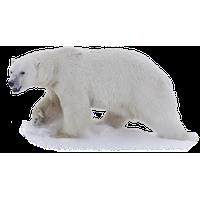 Polar Bear PNG - 25836