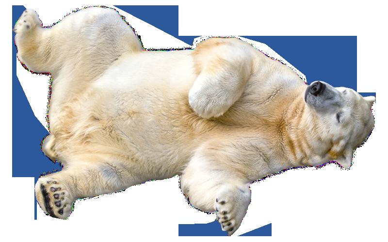 Polar Bear Transparent PNG