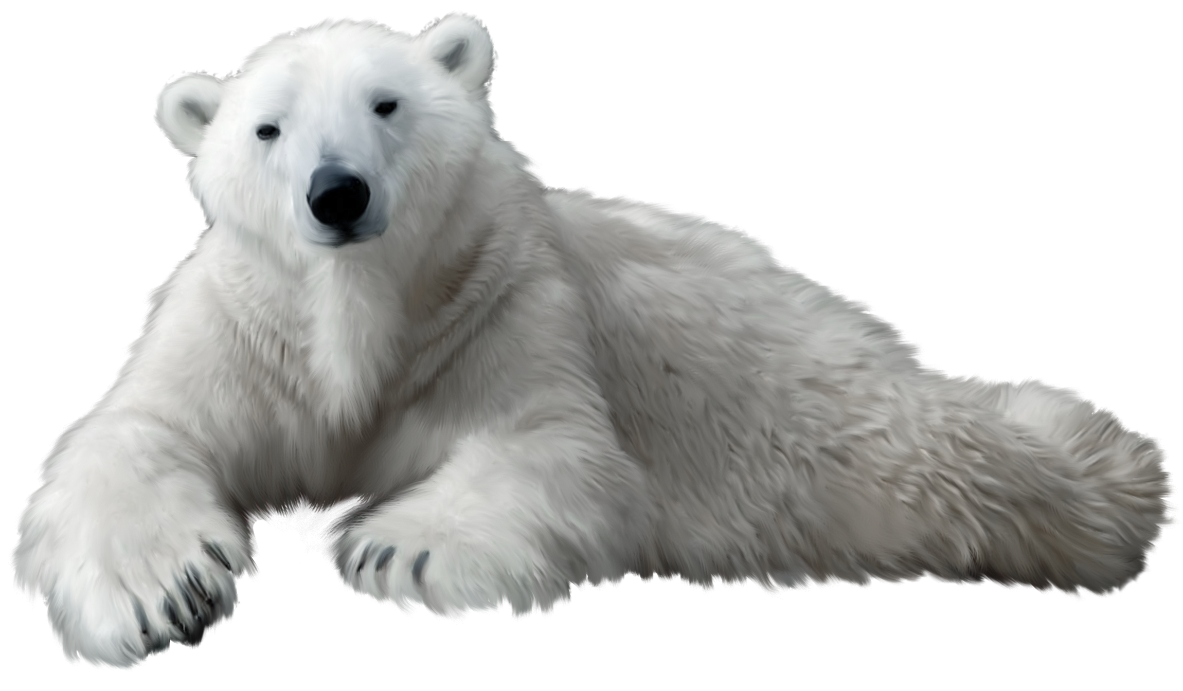 polar bear png transparent polar bear png images pluspng bear clipart black and white bear clipart black and white free