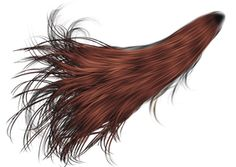 Ponytail PNG HD - 143044