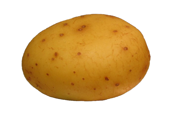 Potato png images, pictures, free download - Potato HD PNG